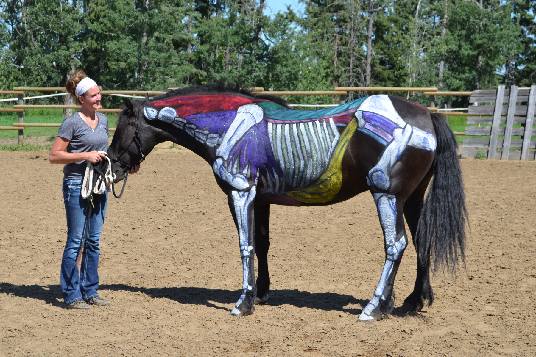 Jody and the Painted Horse